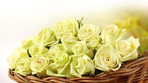 Цветы  (44)